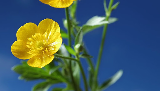 Elixir-floral.jpg